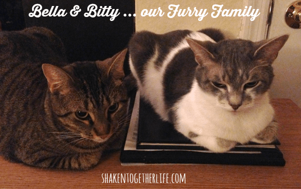 Bitty & Bella - Our Furry Family