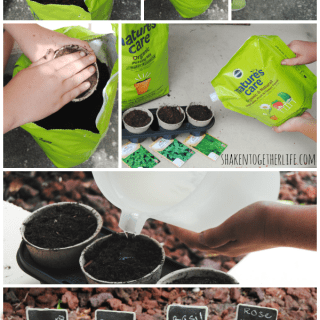 Starting seeds for a pizza garden with Scotts Nature's Care