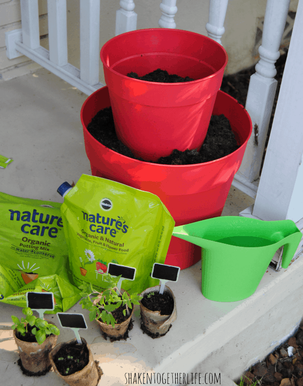 Preparing to re-pot our pizza garden seedlings in our two-tiered planter!