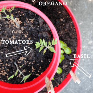 The anatomy of our pizza garden in our easy two-tiered planter!