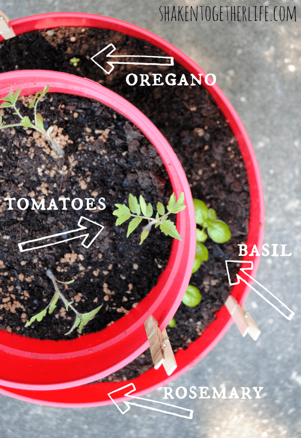 The anatomy of our two-tiered planter pizza garden!