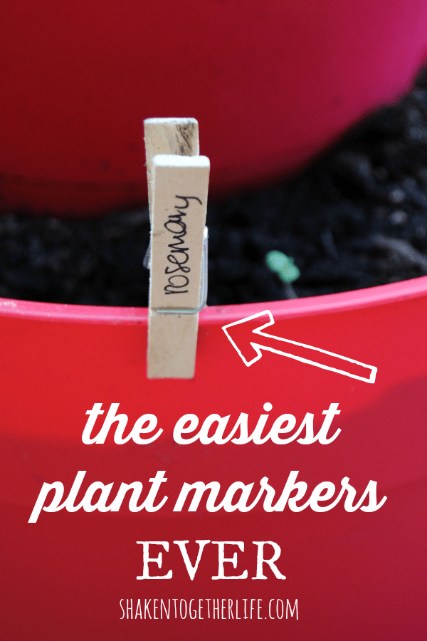 The easiest plant markers EVER!