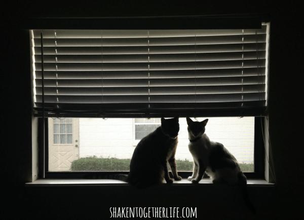 The fur girls of the Neighborhood Watch committee