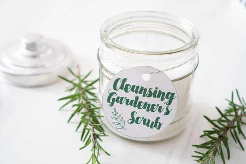 2 ingredient gardener's hand scrub in jar with rosemary sprig