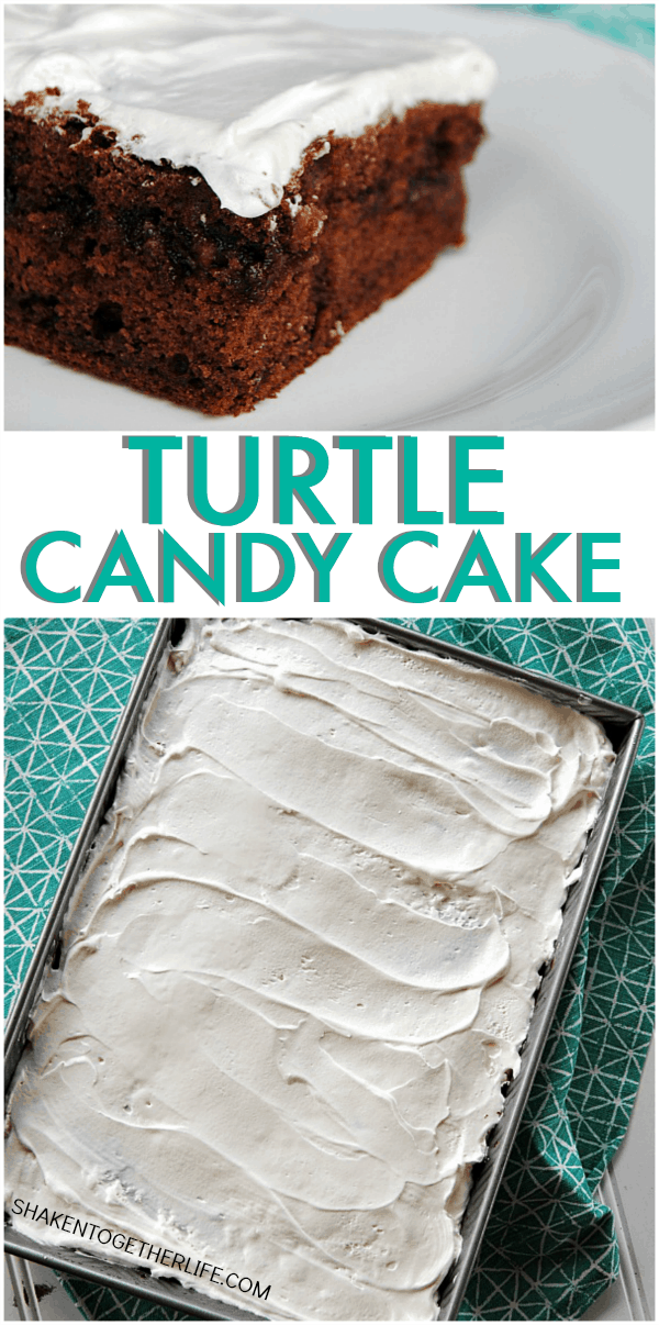 turtle-candy-cake-collage